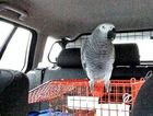 A motorist has had her car seized after being stopped by police in West Yorkshire, who discovered she was a learner driver accompanied only by her pet parrot West Yorkshire Police
