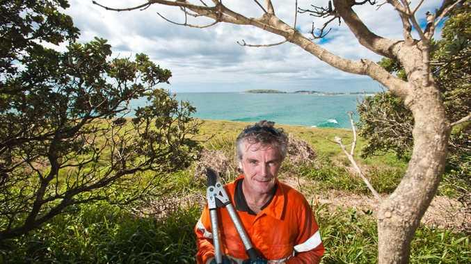 Peter Walsh is waging a war on lantana on McCauleys Headland. Photo: Rob Wright / The Coffs Coast Advocate