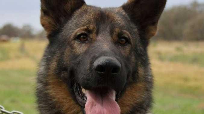 Police Dog Mojo