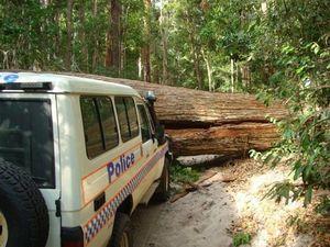Fraser Island police stumped by massive fallen tree