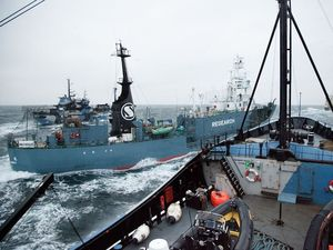 Reports of Japanese ships ramming Sea Shepherd