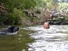 Pepe the dog swims to his owner Jackson Beale at Gardner's Falls near Maleny.