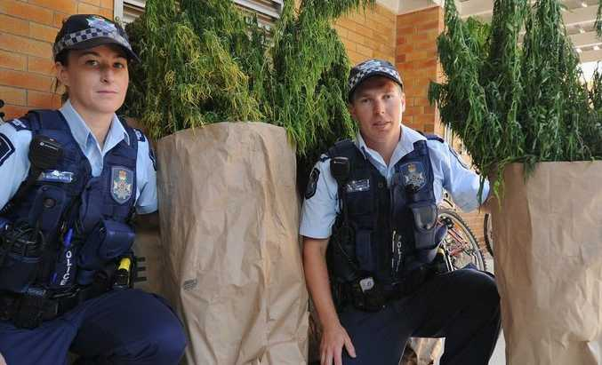 Constables Belinda Nevell and Dylan Rippon at the Hervey Bay Police Station with some of the cannabis plants seized during a raid on the weekend.