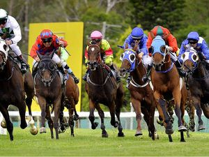 Million-dollar galloper highlights uncertainties of racing