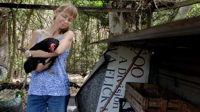 Lynette Feenaghty with one her chooks Photo Tony Martin / Daily Mercury