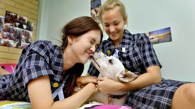 SETTLING IN: Ipswich Girls' Grammar School boarders Maddi Ford and Jane Schefe welcome schoolmate Lunar.
