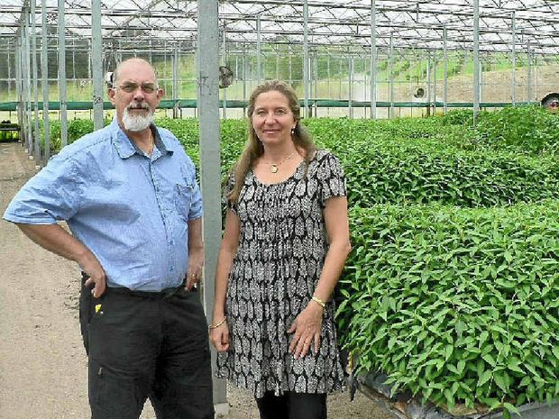 ON A GRAND SCALE: Greenhouse herb growers Robert Hayes and Christine Lucke have learnt to deal successfully with food giant Woolworths.