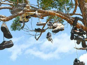 Tourists out on a limb keeping the shoe tree