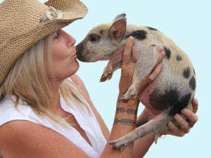 This little piggy went to Kin Kin