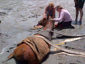 Muddy good effort! Community saves horse stuck in mud