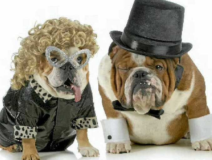 PIMPIN': Be in with a chance to win in The Observer's Pimp My Pet competition.