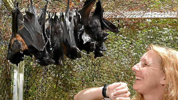 JUST HANGIN' AROUND: Sue Richardson is nursing orphaned bats back to health.