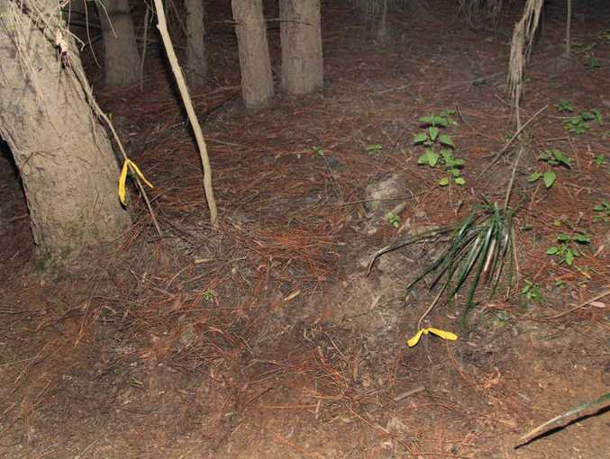 A police photograph showing where the shoe of Daniel Morcombe was found in the Glasshouse Mountains.