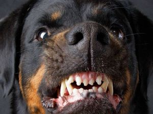 Not all large dogs deserve the blame for attacks