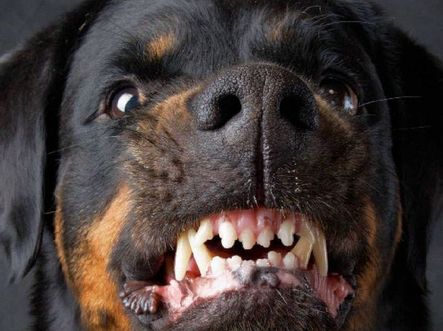 BITING BACK: A dog owner is concerned that many people assume all big dogs are vicious.