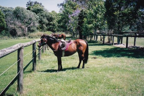 Charlie Walsh's horse, Susie, was shot at Kurwongbah. Photo Jorge Branco / Caboolture News