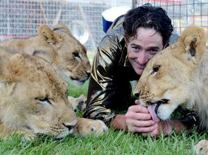 Lion jumps reporter as circus aims to bust cruelty myth