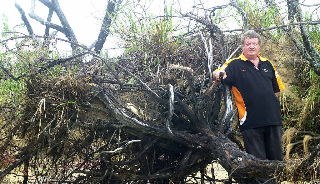 DAMAGE: Mackay Recreational Fishers Alliance president Lance Murray with the casuarina trees destroyed by being chained to boats at Bucasia.