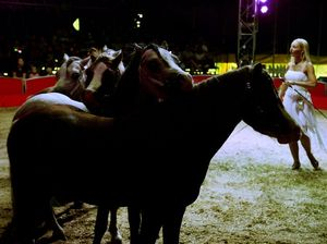 Australia must ban wild animals in the circus