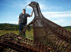 $60,000 goanna sculpture all paid-up with nowhere to go