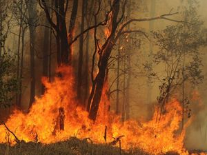 Fire crews backburn to keep blaze in state forest