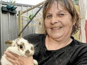 Tweed RSPCA needs volunteers, but no rabbits please
