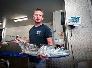 Large Spanish mackerel off the menu