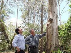 Koala kits will have info on preferred trees