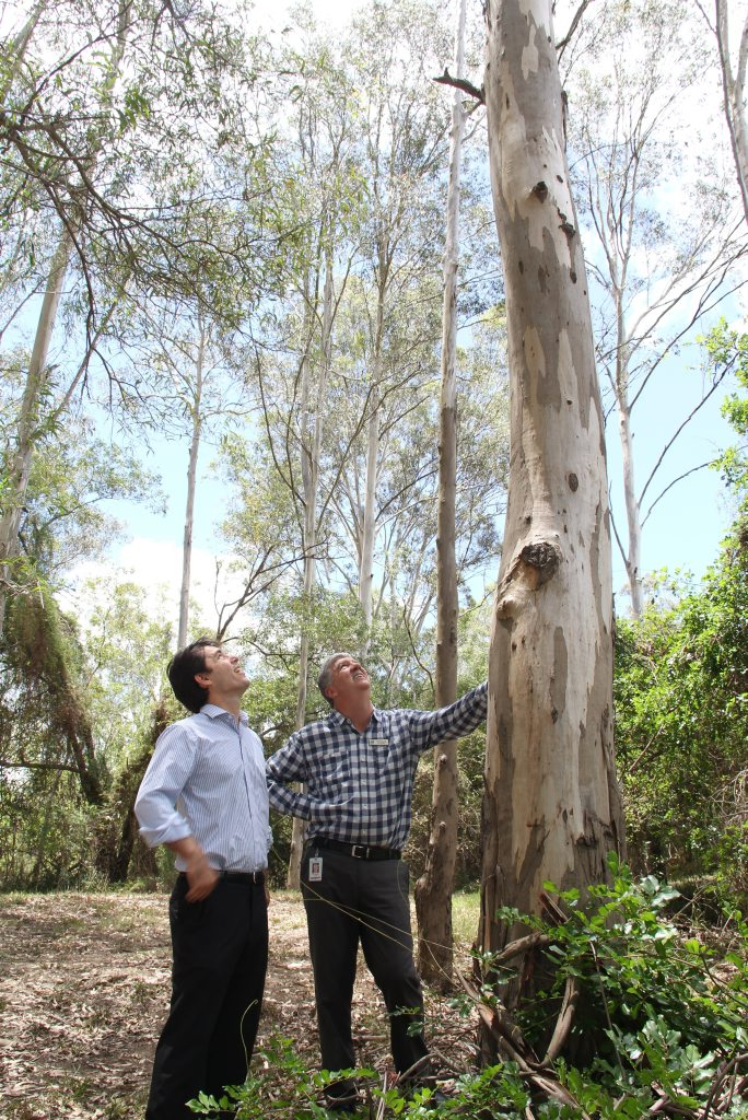 Councillors Phil Truscott and George Seymour look for koalas in Tinana's Pioneer Park. The council has started a project create a tree-lined corridor to link the park with the Police Paddock. Photo Contributed