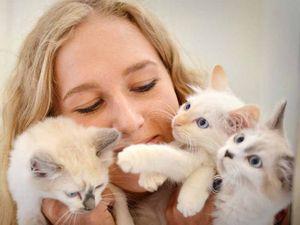 Cat influx worries Gympie RSPCA