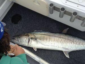 Mackerel edging in
