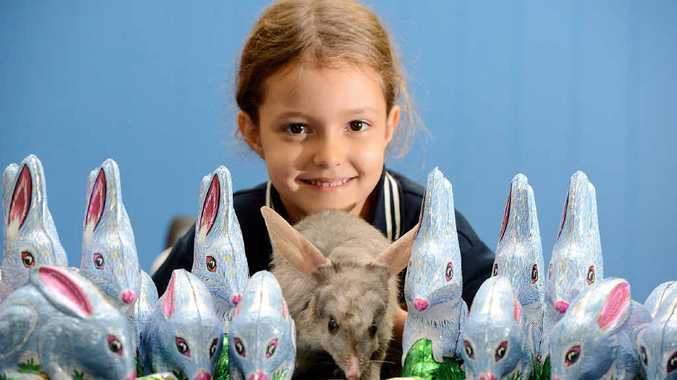 SWEET TREATS: Piper Delpaul with Jodie the bilby and the Pink Lady chocolate bilbies now available for Easter at major retailers.