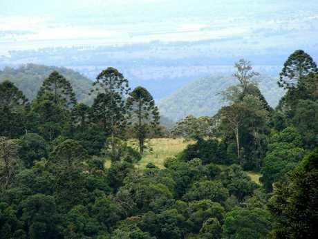 The Bunya Mountains.