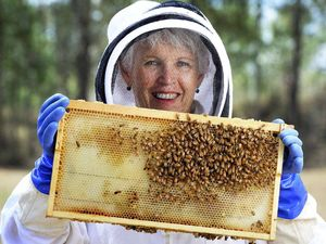 Bee keepers have a field day, honey