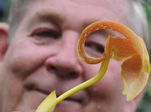 Green thumbs go gaga for horticulturist's orchid talk