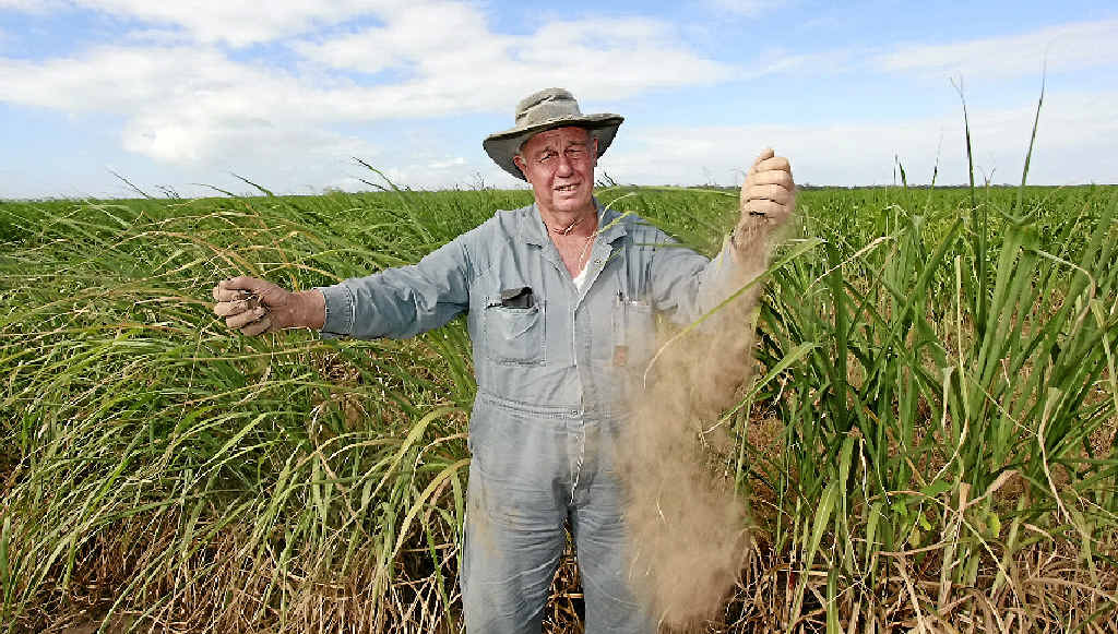 NOT A DROP: Cane farmer Clyde Hubert on his parched Gooburrum property.