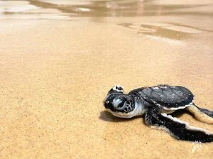 Greens push for reduced storey limit to save turtles