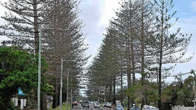 WARNING: The Norfolk Island Pine trees lining Shirley Street in Byron Bay look sick and need urgent attention a landscape architect has warned.