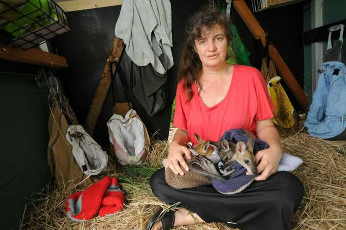 Renata Phelps from WIRES with wallabies kept by warm by knitted woollen pouches made in South Africa.
