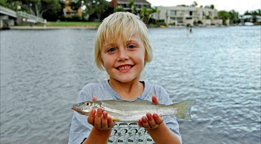 Young Zac McCrudden's big whiting from the lower Noosa River. Photo: Contributed.