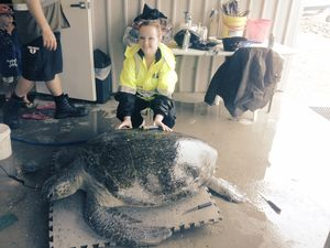 Donations of food welcomed to feed 140kg ill turtle