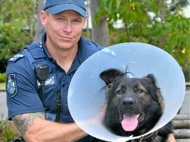 IN THE LINE OF DUTY: Senior Constable Justyn Mergard with the recuperating police dog DJ.