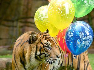 Big cat nips zoo handler on World Tiger Day