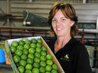 TANGY OFFERING: Linda Vickers in the shed at Bundy Limes.