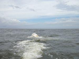 Ballina Jet Boat Rescue