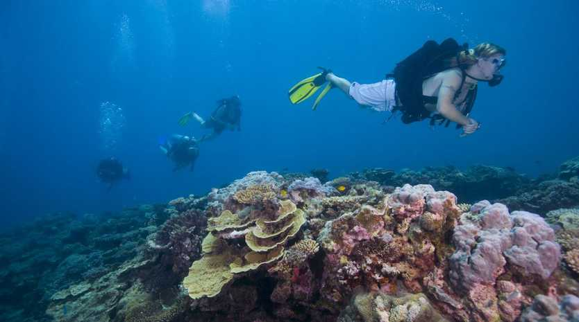 The Fight for the Reef Facebook page this morning stated that this was a 'significant win'.