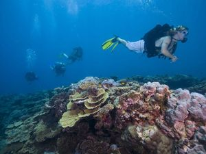 Blogging the Southern Great Barrier reef to the world