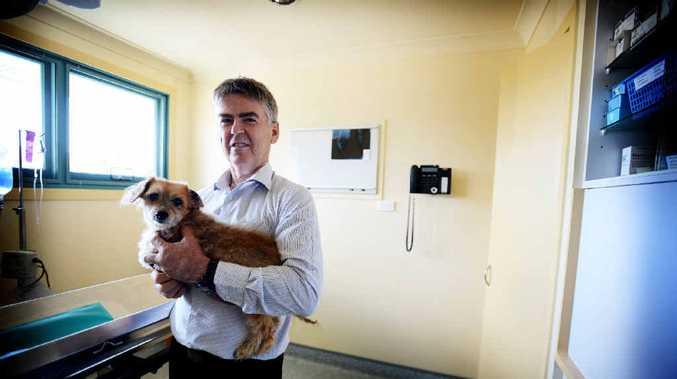 URGING IMMUNISATION: Dr Ian King from Ballina Veterinary Hospital with Simba.