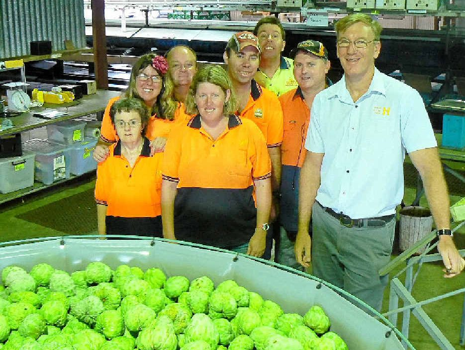 DEDICATED WORKFORCE: Staff at Summerland House Farm gather around the custard apple packing table with CEO Brett Lacey (right).