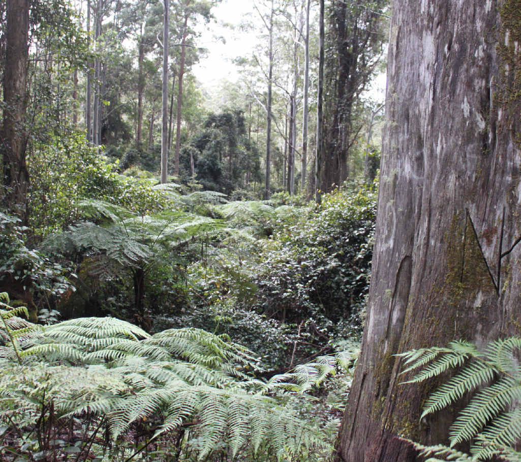 A man has appealed for someone to acquire forestry west of Toowoomba. Generic image shown.